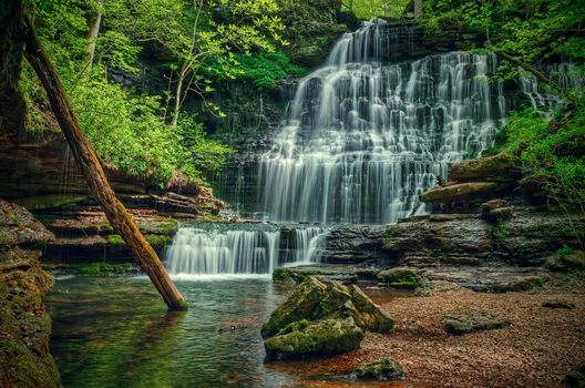 forest, trees, small river, waterfall, rock, nature, landscape, State Natural Area, Tennessee