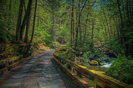 forest, trees, road, small river, waterfall, bridge, Gatlinburg, Tennessee, landscape