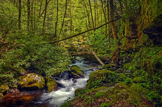 Great Smoky Mountains National Park, Tennessee, forest, trees, small river, stones, nature