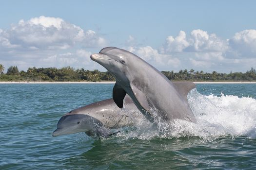 sea, waves, Dolphins, jumping