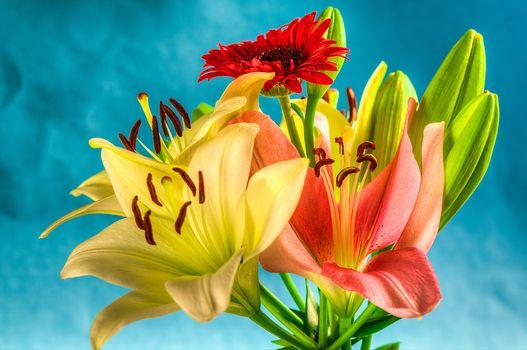 bouquet, flowers, lily, flora