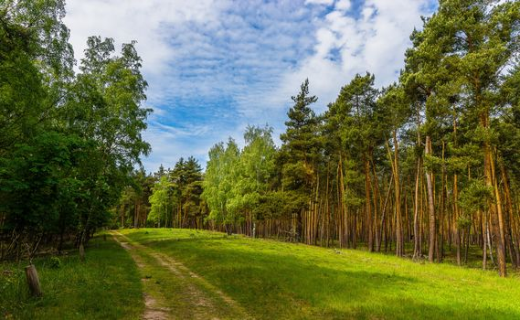forest, trees, road, landscape