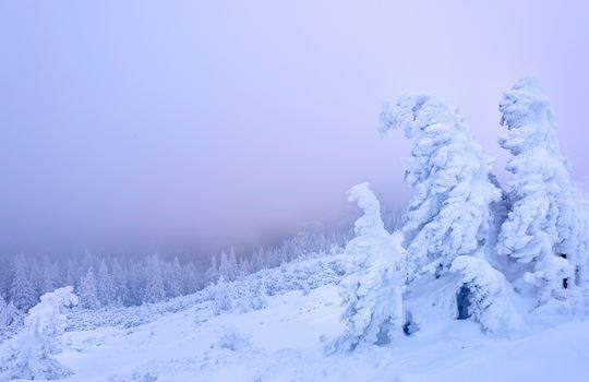 Chakhleu, Romania, winter, the mountains, trees, sunset