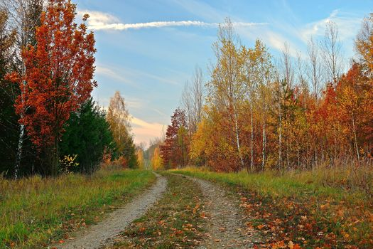 autumn, road, forest, trees, landscape