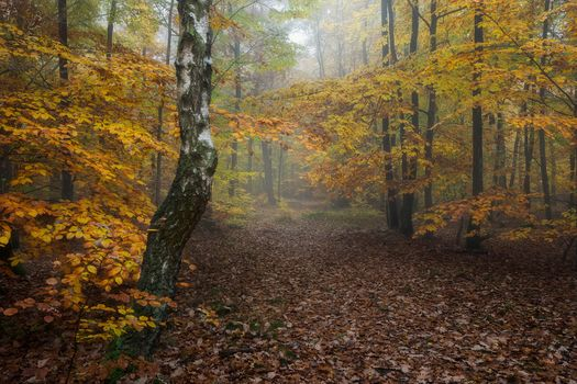 autumn, forest, trees, fog, nature