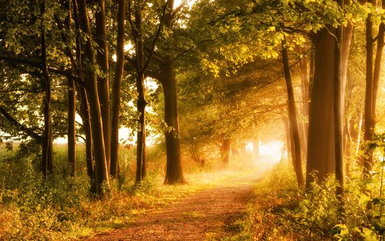forest, trees, road, the sun, Sun rays, landscape