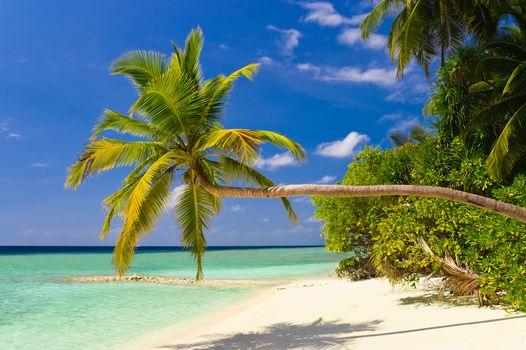 sea, palm trees, Coast, beach