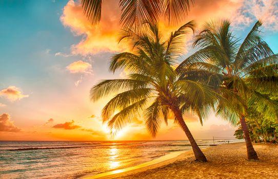 sunset, sea, palm trees, beach