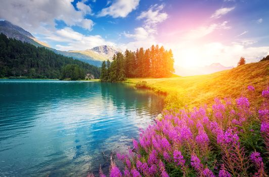 lake, the mountains, hills, Coast, flowers, trees, landscape