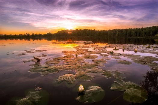 sunset, lake, lily, trees, landscape