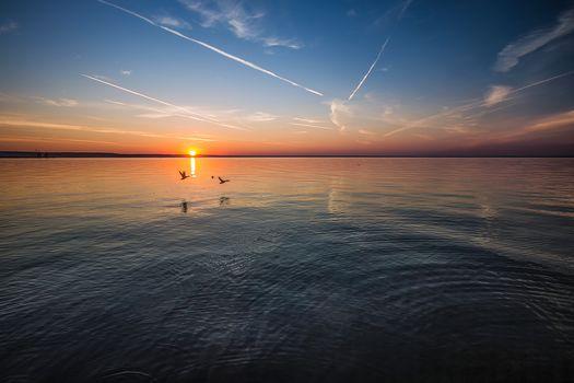 sunset, sea, birds