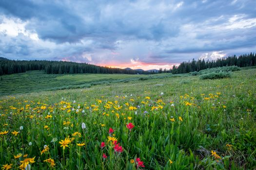 sunset, field, hills, flowers, trees, landscape