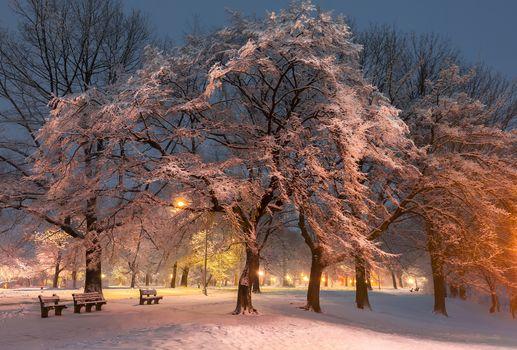 winter, park, road, shops, trees, lights, illyuminatsiya, landscape