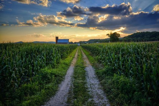sunset, field, road, landscape