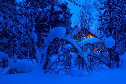 winter, forest, night, trees, snowdrifts, lodge, landscape
