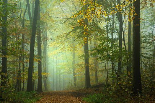 autumn, forest, trees, road, fog, landscape