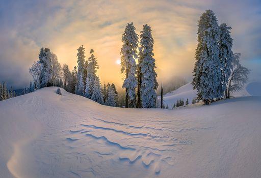 winter, sunset, snowdrifts, hills, trees, landscape