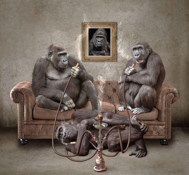 monkey, hookah, kaif