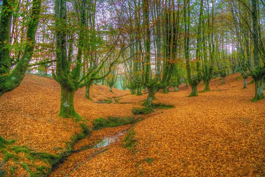 Otzarreta, Bizkaia, Spain, forest, autumn, small river, trees, landscape