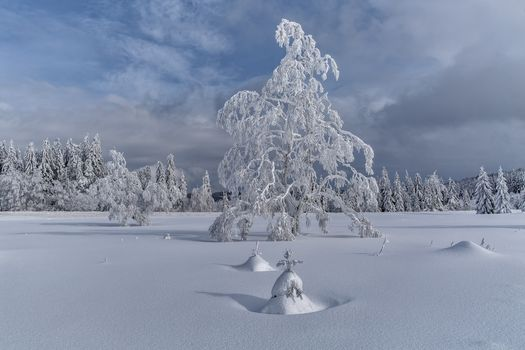 winter, snow, trees, snowdrifts, landscape