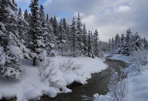 Banff National Park, Alberta, Canada, winter, River, trees, landscape