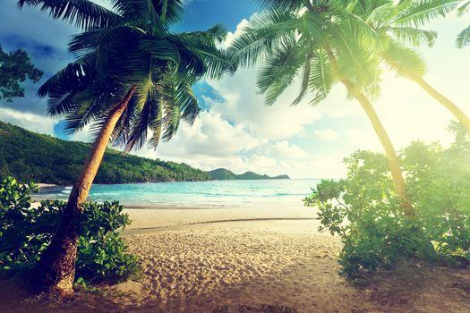 море, солнце, берег, пляж, пальмы, пейзаж
