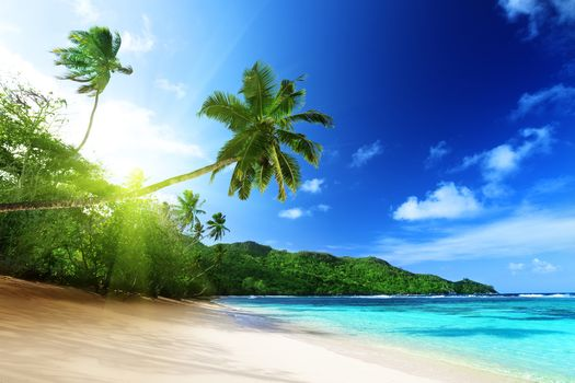 sea, the sun, Coast, beach, palm trees, landscape