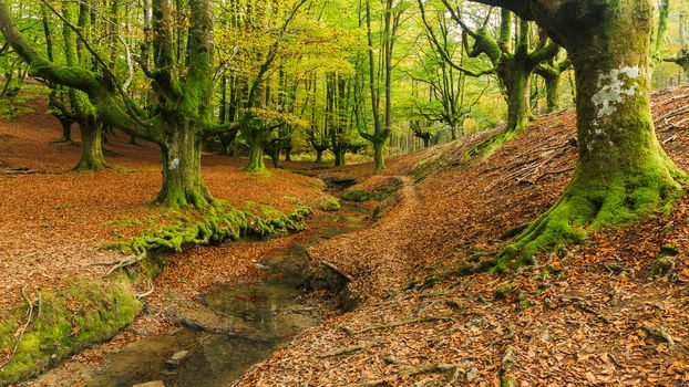Otzarreta, Bizkaia, Spain, forest, trees, small river, landscape