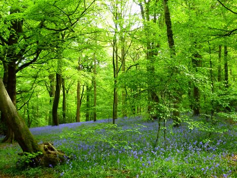 forest, trees, flowers, nature