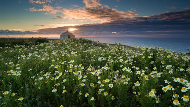 Cape Eshpishel, Portugal, sea, Coast, flowers, chamomile, sunset, landscape