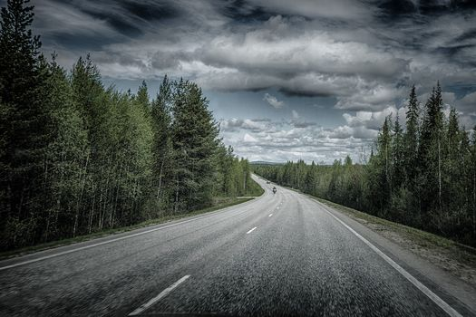 road, forest, trees, landscape