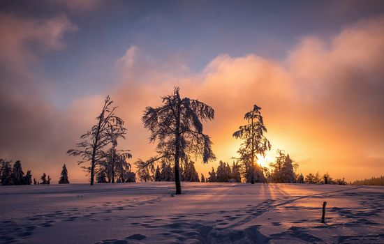 winter, sunset, snow, trees, landscape