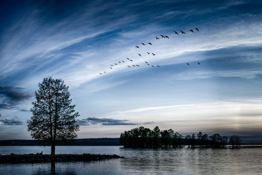 sunset, lake, trees, flock of birds, silhouettes, landscape