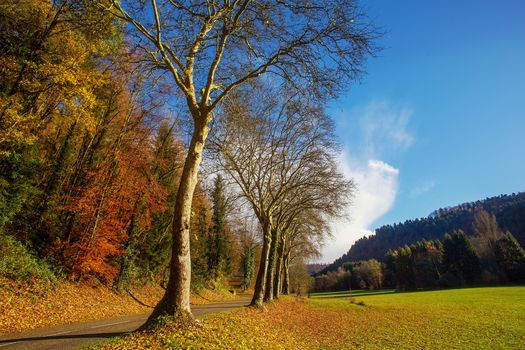 autumn, field, road, forest, trees, landscape