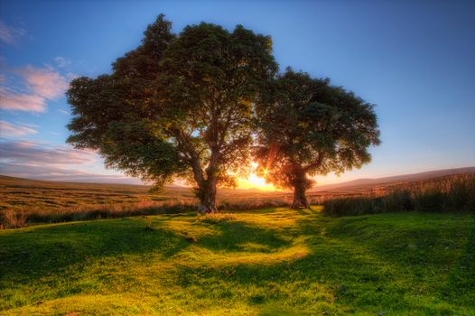 sunset, field, trees, landscape
