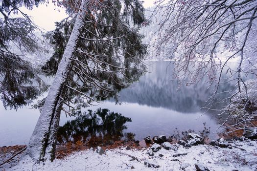 Feldsee, Germany, black forest, winter, lake, trees, landscape