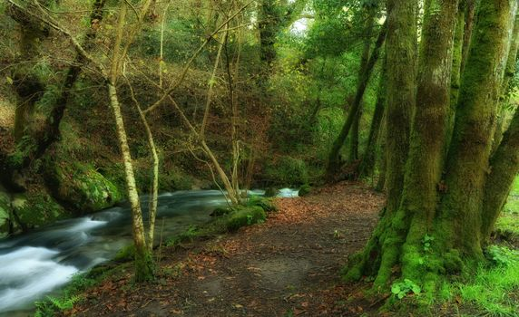 Salnes, Galicia, Spain, forest, trees, road, River, landscape