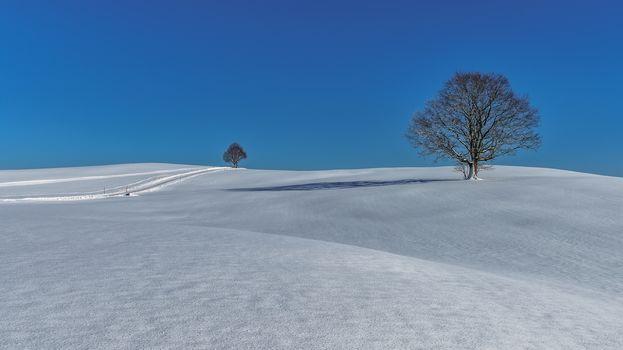 winter, snow, hills, snowdrifts, trees, landscape