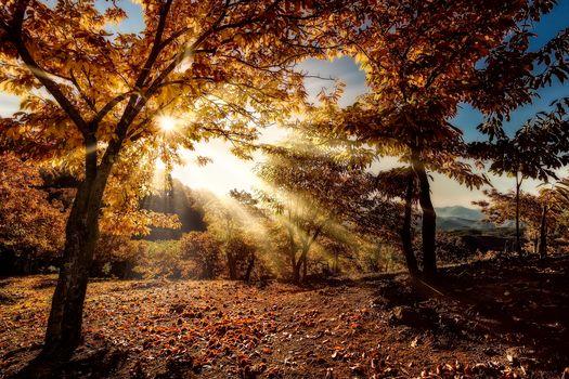 autumn, the lights of a sun, trees, hills, landscape
