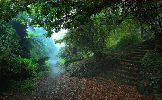 Katoomba, Australia, park, road, trees, steps, landscape