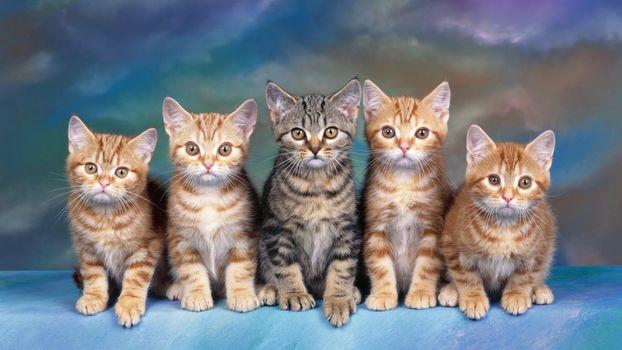 cats, cats, kittens, animals