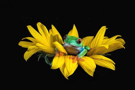 flower, frog, macro
