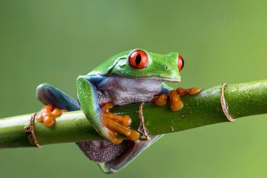 branch, frog, macro