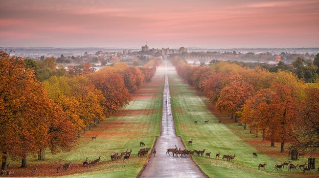 Windsor castle, Windsor Castle, Windsor, Berkshire County, England, autumn, road, lawn, Helena, sunset, landscape