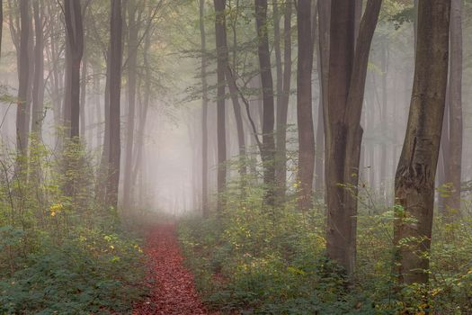 forest, trees, path, fog, nature