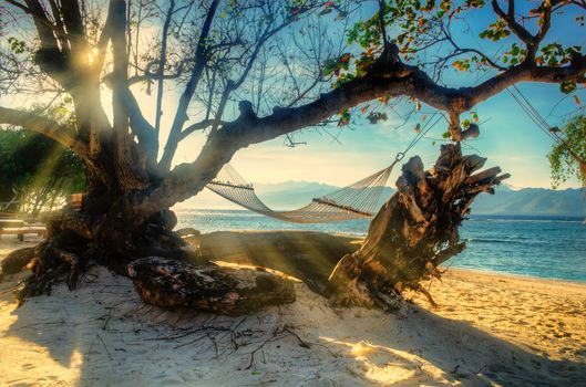 sea, beach, tree, hammock, landscape