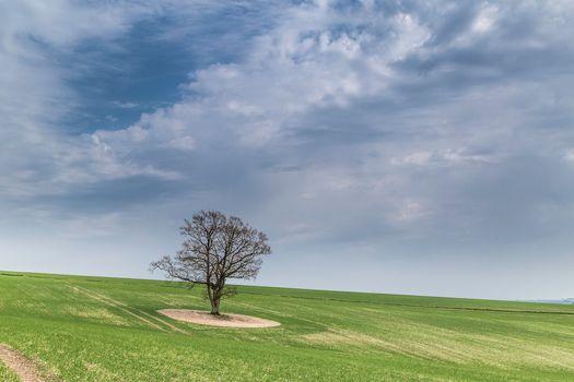 field, Hill, tree, landscape