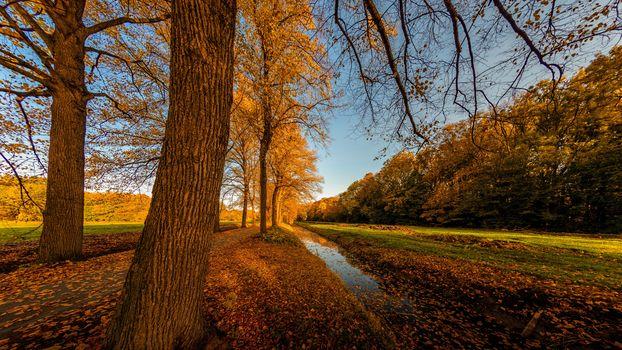 autumn, field, trees, canvas, channel, nature, landscape