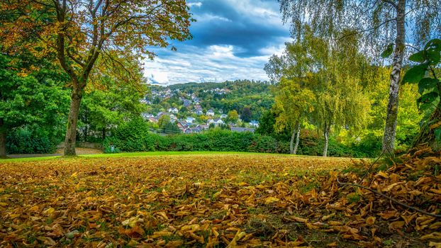 autumn, meadow, trees, at home, fallen leaves, nature, landscape