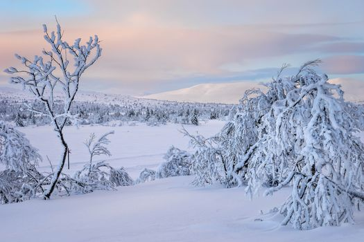 sunset, winter, snow, snowdrifts, trees, landscape
